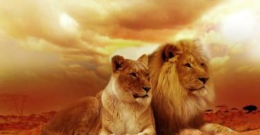 lion-577104_1280-2